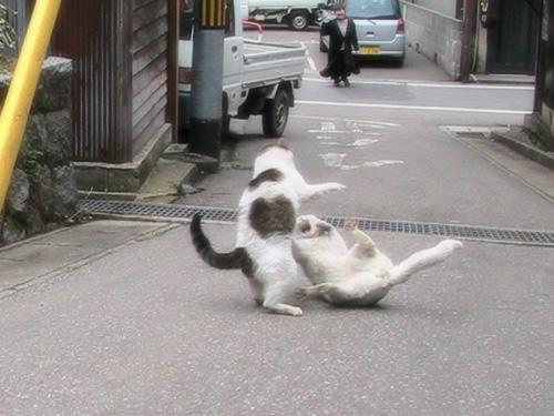 キャットファイト&女闘美フェチ 〜ROUND.21〜YouTube動画>14本 ニコニコ動画>1本 ->画像>81枚