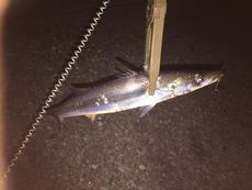 夜釣りはイマイチ…?
