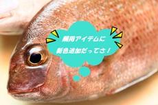 ジャッカル定番鯛用アイテムに新色追加だっぺ!