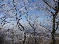 綿向山の霧氷