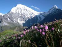 ブルーポピーをみる高山植物トレッキング