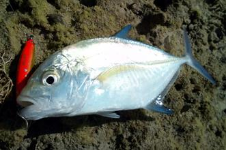 沖縄ルアー釣り情報基地