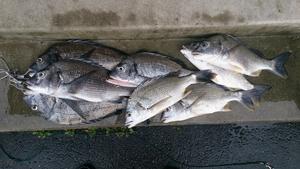 鹿児島 RYOパパの釣り日記