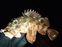 12月の釣行とFシステムのインプレ