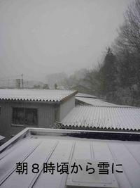 一年ぶりの雪