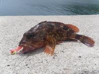2011年度第1回釣りの会